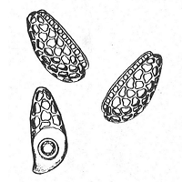 Advanced Classical Jewellery Design (JD300)